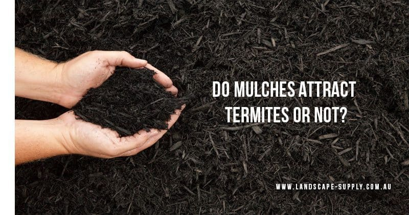 Does Cypress Mulch Attracts Termites Or Not