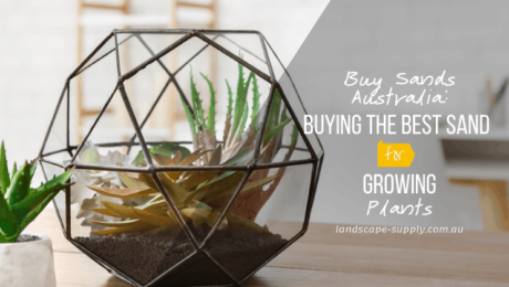 succulents in indoor plant bowl with sand