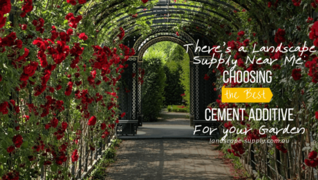 cement pavement in garden with red flowers