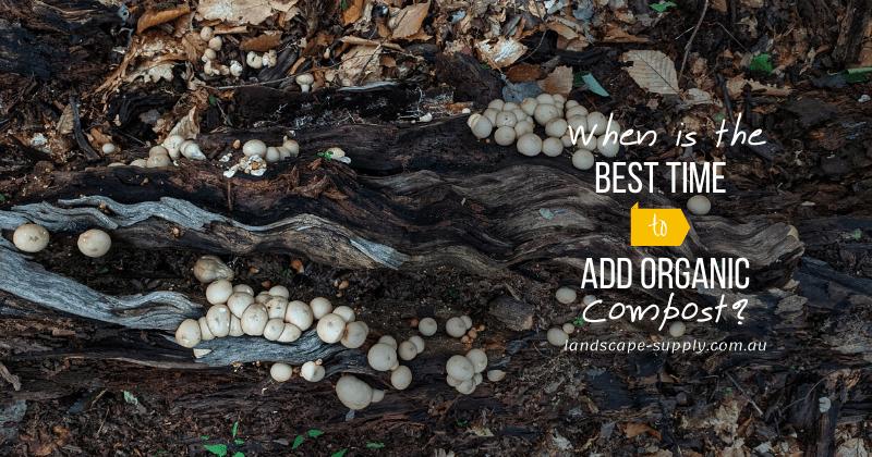 soil, bark, and mushrooms