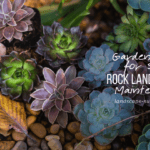 rocks in succulent garden